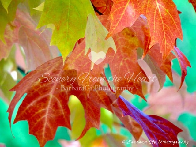 Trees & Leaves photography by Barbara Gi