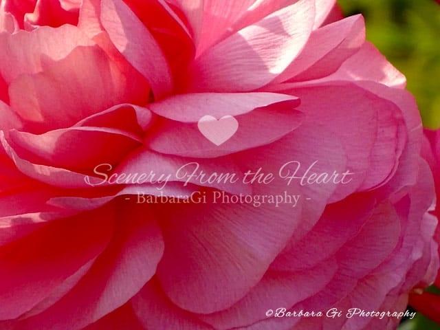 Flower photography by Barbara Gi
