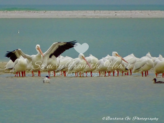 Bird photography by Barbara Gi